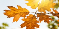Autumn leaves in the sun of light - Gorod55.Ru